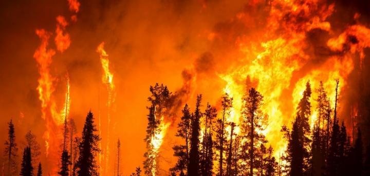 Un país en llamas: el año negro de los incendios
